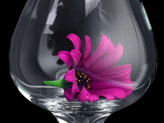 Daisy Glass Macro